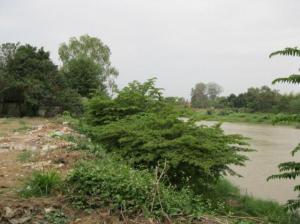 ที่ดิน 22000000 เชียงใหม่ เมืองเชียงใหม่ ป่าตัน