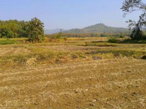 ที่ดิน 1300000 พะเยา กิ่งอำเภอภูซาง ป่าสัก