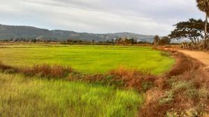 ที่ดิน 500000 พิษณุโลก นครไทย บ้านพร้าว