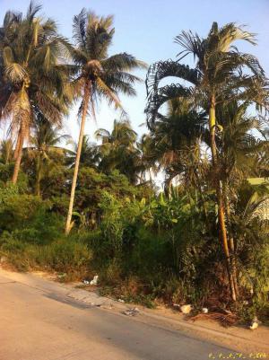 ที่ดิน 45000 กรุงเทพมหานคร เขตจอมทอง จอมทอง