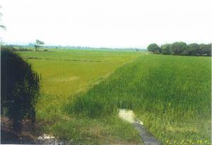ไร่นา 1,700,000 ลพบุรี ท่าวุ้ง หัวสำโรง