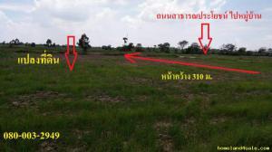 ไร่นา 95000 นครราชสีมา โนนไทย ถนนโพธิ์