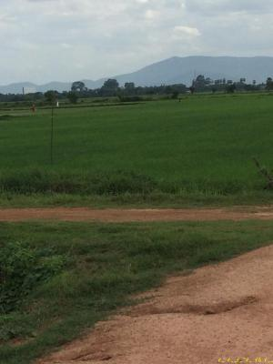 ที่ดิน 160000 เพชรบุรี เมืองเพชรบุรี ต้นมะพร้าว