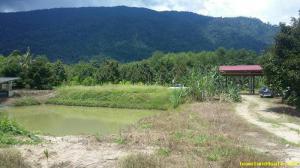 ไร่สวน 3.8ล้าน จันทบุรี กิ่งอำเภอเขาคิชฌกูฏ พลวง