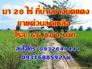ไร่นา 66000 พะเยา เชียงคำ อ่างทอง