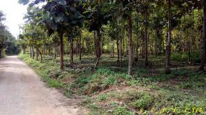 ที่ดิน 3800000 เชียงราย เวียงป่าเป้า สันสลี