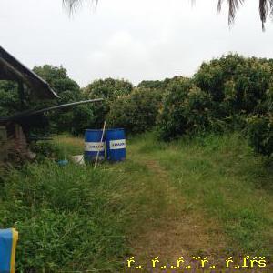 ที่ดิน ุ6200000 จันทบุรี สอยดาว ทับช้าง