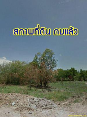 ที่ดิน 6500000 ชลบุรี พานทอง พานทอง