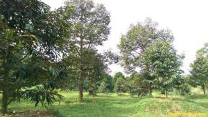 ไร่สวน 6แสนบาท/ไร่ จันทบุรี กิ่งอำเภอเขาคิชฌกูฏ คลองพลู