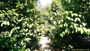 ไร่สวน 15ล้านบาท จันทบุรี กิ่งอำเภอเขาคิชฌกูฏ พลวง