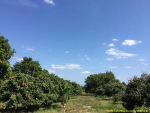 ที่ดิน ไร่ละ800000 จันทบุรี วังแซ้ม มะขาม
