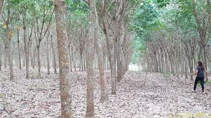 ไร่สวน 15000000 จันทบุรี กิ่งอำเภอเขาคิชฌกูฏ ตะเคียนทอง