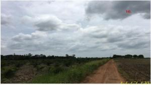 ที่ดิน 1320000000 ชลบุรี หนองใหญ่ หนองเสือช้าง