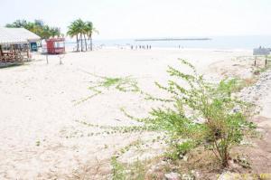 ที่ดิน 30000000 เพชรบุรี เมืองเพชรบุรี หาดเจ้าสำราญ
