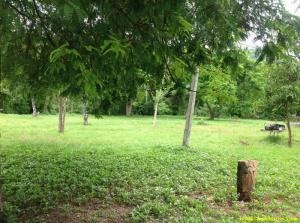 ที่ดิน 280000/ไร่ กาญจนบุรี เมืองกาญจนบุรี เกาะสำโรง