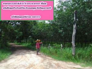 ไร่สวน 8,918,000 อุบลราชธานี เดชอุดม ป่าโมง