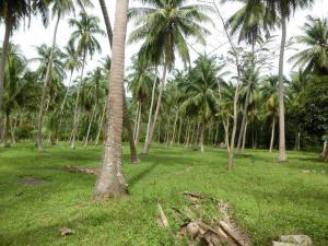 ที่ดิน 36285000 สุราษฎร์ธานี เกาะพะงัน เกาะพะงัน