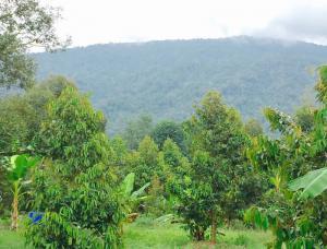 ที่ดิน 5500000 จันทบุรี กิ่งอำเภอเขาคิชฌกูฏ ตะเคียนทอง