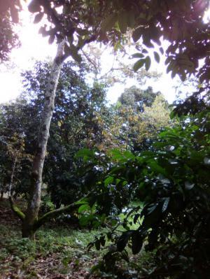 ไร่สวน ขายรวม 3ล้านบาท จันทบุรี แหลมสิงห์ พลิ้ว