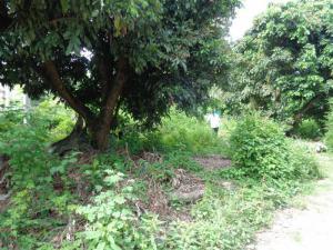 ที่ดิน 750000 เชียงใหม่ แม่แตง สันป่ายาง