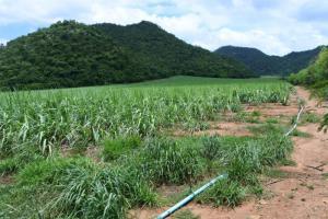 ที่ดิน 20000000 กาญจนบุรี บ่อพลอย หนองกุ่ม