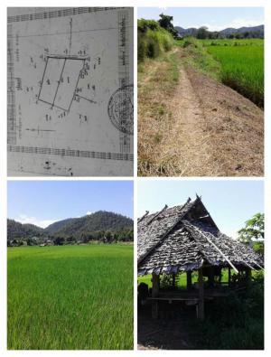 ไร่นา 1,600,000  แม่ฮ่องสอน เมืองแม่ฮ่องสอน ปางหมู