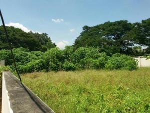 ที่ดิน 3390000 ปทุมธานี เมืองปทุมธานี สวนพริกไทย