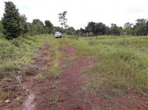 ที่ดิน 500000 เชียงใหม่ ดอยสะเก็ด ป่าเมี่ยง