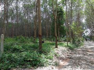 ไร่สวน 1.9 ล้านบาท จันทบุรี มะขาม วังแซ้ม