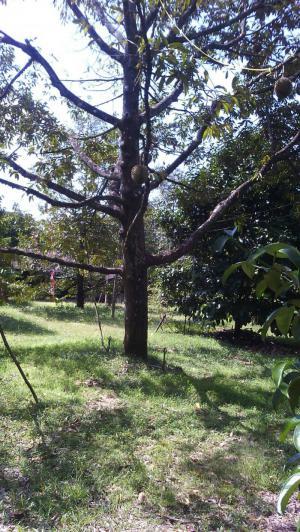 ไร่สวน รวม 6.5 ล้านบาท จันทบุรี ขลุง บ่อ