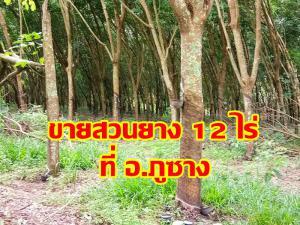 ที่ดิน 270,000 พะเยา กิ่งอำเภอภูซาง ป่าสัก