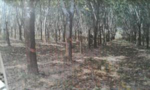 ที่ดิน 3000000 นครพนม ธาตุพนม อุ่มเหม้า
