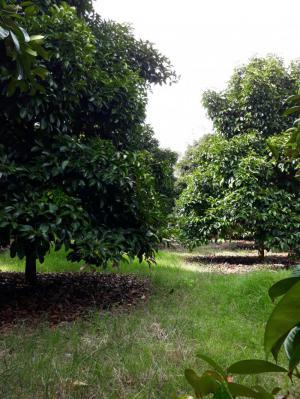 ไร่สวน รวม 3.8ล้านบาท จันทบุรี มะขาม อ่างคีรี