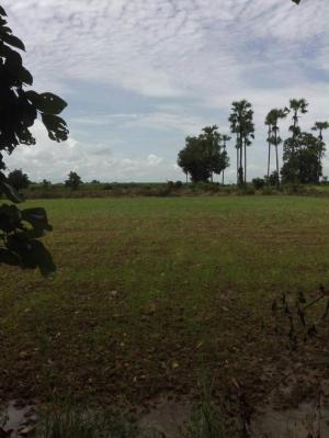 ที่ดิน 100000 สุโขทัย เมืองสุโขทัย บ้านกล้วย