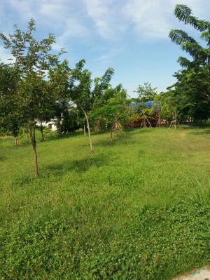บ้านพร้อมที่ดิน 25,000 ชลบุรี เมืองชลบุรี เสม็ด