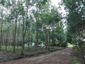 ไร่สวน 3825000 จันทบุรี กิ่งอำเภอเขาคิชฌกูฏ จันทเขลม