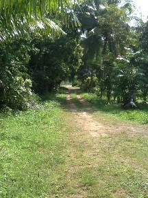 ที่ดิน 45900000 ราชบุรี สวนผึ้ง ท่าเคย