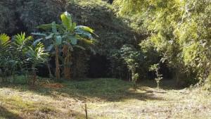 ที่ดิน 750000 เชียงใหม่ ดอยสะเก็ด ป่าเมี่ยง