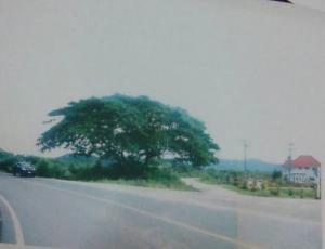 ที่ดิน 21ล้าน เพชรบุรี ชะอำ เขาใหญ่