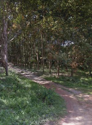 ไร่สวน 50680000 ระนอง กระบุรี ปากจั่น