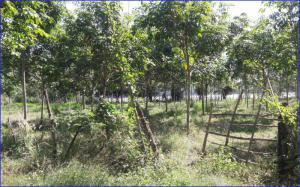 ที่ดิน 1900000 นครพนม ธาตุพนม น้ำก่ำ
