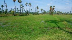ที่ดิน 5242500 เพชรบุรี เมืองเพชรบุรี ไร่ส้ม
