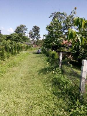 ไร่นา 6394500 เชียงราย เมืองเชียงราย ป่าอ้อดอนชัย