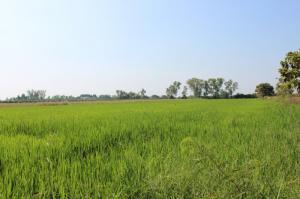 ไร่นา 1250000 สุพรรณบุรี เมืองสุพรรณบุรี สนามคลี