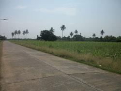 ที่ดิน 980000 กาญจนบุรี ท่ามะกา แสนตอ
