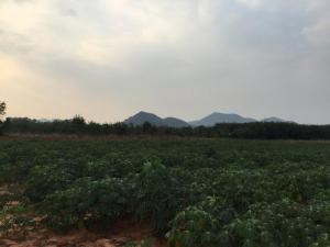 ที่ดิน 250000 ราชบุรี โพธาราม หนองกวาง