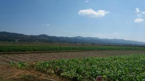 ที่ดิน 1550000 น่าน ท่าวังผา ป่าคา