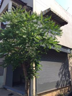อาคารพาณิชย์ 1650000 ราชบุรี วัดเพลง เกาะศาลพระ