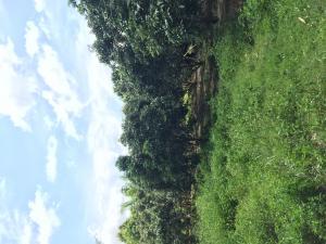 ไร่สวน 100000 พะเยา จุน หงส์หิน