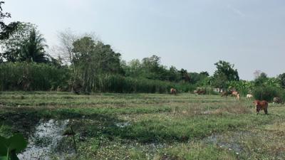 ที่ดิน 7900000 กรุงเทพมหานคร เขตทวีวัฒนา ศาลาธรรมสพน์